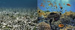 Sceptics respond to Australia's latest efforts to save Great Barrier Reef