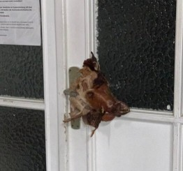 Germany:  Pig's-head vandalism of mosque condemned