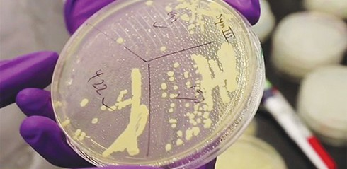 Scientists create synthetic yeast chromosome that could revolutionise medicine