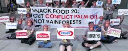 Palm Oil: Versatility amid controversy