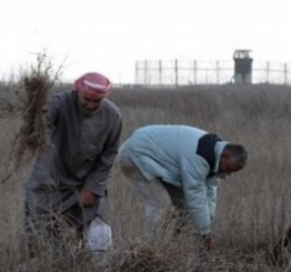 Palestine: Israeli army opens fire in Gaza farmlands