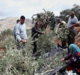 Palestine: Israeli settlers spray Palestinian crops with chemicals