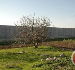 Palestine: Israel confiscates 1,000 acres of Palestinian land south of Bethlehem