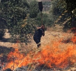 Palestine: Israeli soldiers burn Olive trees near Hebron