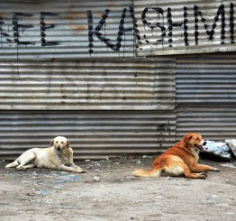Jammu & Kashmir: 3 Indian paramilitary troops killed in shootout