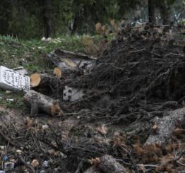 Palestine: Israel demolishes Muslim graves near Al-Aqsa mosque